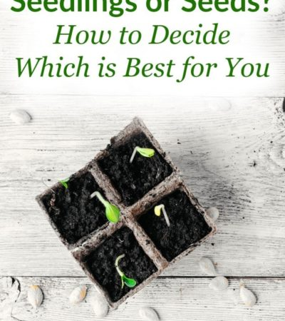 Before you start planting, look at the benefits of both seedlings and seeds, so you can decide which one is best for you and your gardening goals!