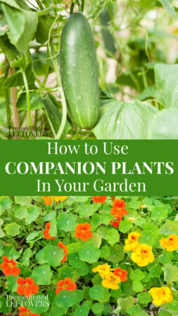 using companion plants in your garden