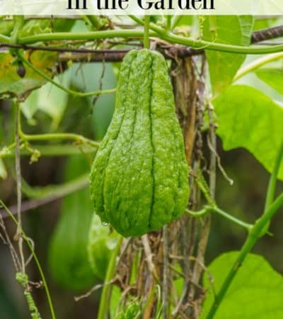 How to grow gourds