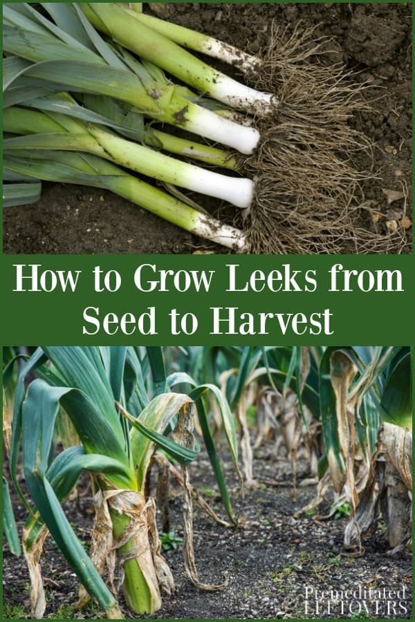 How to grow leaks