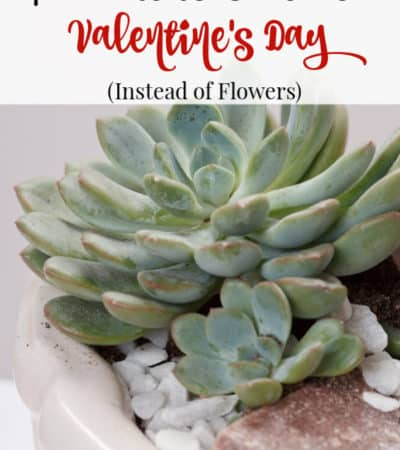 7 plants to give for Valentine's Day instead of flowers.