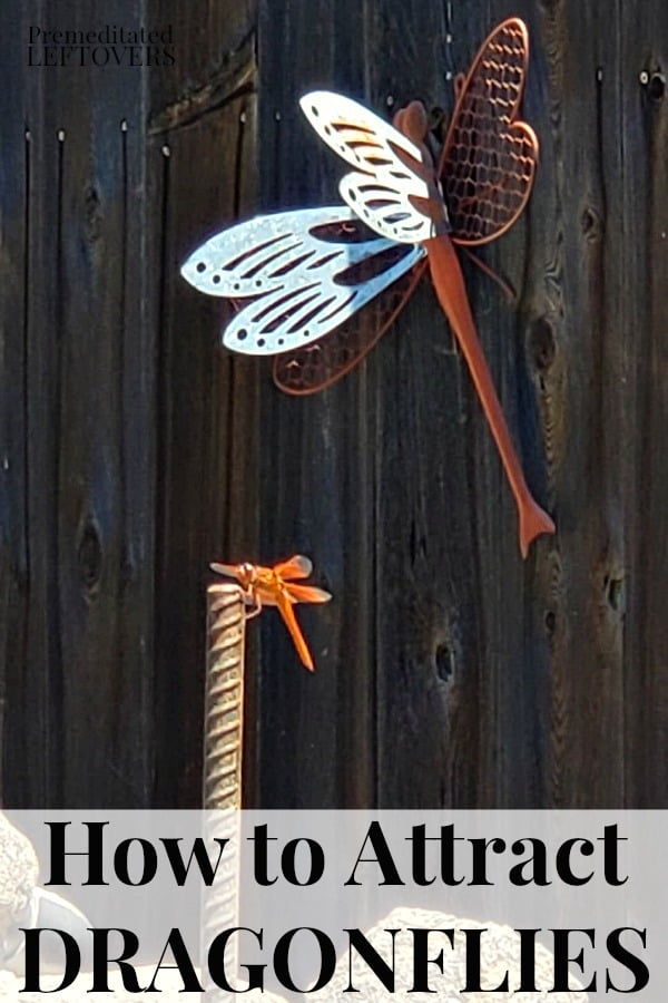 dragonfly on a stake in front of metal dragonfly sculpture